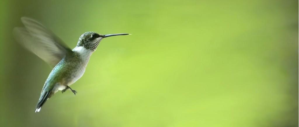 green-pest