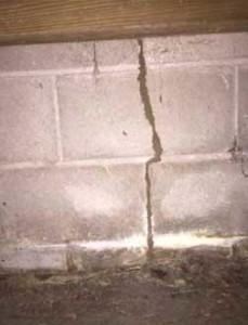 Subterranean Termite Mud Tube