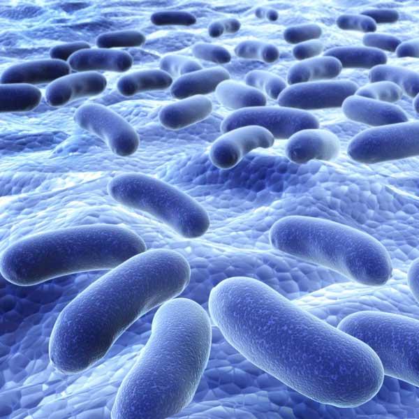 Skin Bacteria