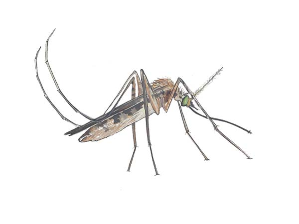 Mosquito Pest Identification Cloud Termite And Pest
