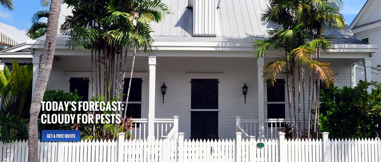 Termite Exterminators Sarasota, Bradenton